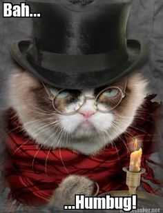 Scrooged! For more fun holiday cats, visit https://www.facebook.com/funholidaycats