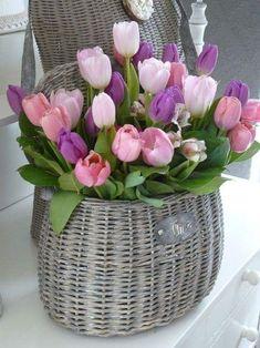 Floral Arrangement ~ Basket of tulips. Tulips Flowers, My Flower, Daffodils, Fresh Flowers, Spring Flowers, Flower Power, Beautiful Flowers, Flower Basket, Purple Tulips