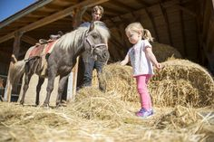 Bauernhofurlaub Schreinerhof Bayern im Heu mit Pferd