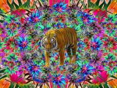 Weed Tiger <3 Weed, Lion, Painting, Animals, Art, Leo, Art Background, Animales, Animaux