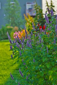 Why don't people share more pics of their gardens? - Perennials Forum - GardenWeb