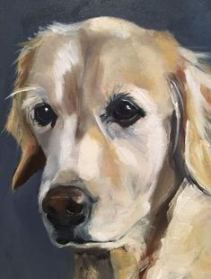 Oil on canvas Golden retriever. Oil on canvas Golden Retriever Art, Golden Retrievers, Dibujos Cute, Wow Art, Dog Portraits, Painting Portraits, Abstract Oil, Animal Paintings, Painting Inspiration