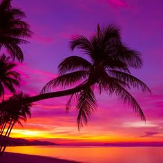 Palm tree silhouette at sunset on tropical beach Wall Mural ✓ Easy Installation ✓ 365 Days to Return ✓ Browse other patterns from this collection! Romantic Beach Photos, Beautiful Beach Pictures, Beautiful Beaches, Beach Sunset Pictures, Sunset Photos, Beautiful Sunset Images, Pretty Images, Romantic Quotes, Colorful Pictures