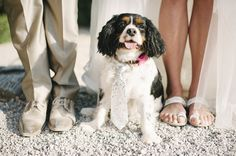 Our favorite guest. Percey the Cavalier King Charles Spaniel. Muse of Cavalier handbags!  Photo By Ana Lui Studio