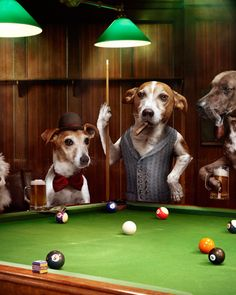 """Photographer Julian Wolkenstein used real dogs to reimagine """"The Hustler"""" by artist Arthur Sarnoff, the iconic painting of dogs playing pool."""