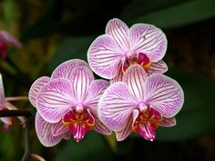 Flowers in the Amazon Rainforest