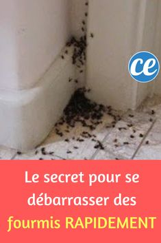 The secret to getting rid of ants quickly. Dibujos Tumblr A Color, Get Rid Of Ants, Small Space Interior Design, Home Organisation, Sky Painting, Paint Colors For Living Room, Diy Cleaners, Simple Life Hacks, Home Pictures