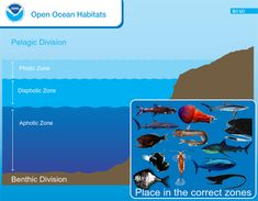 Open Oceans Habitat online game (FREE) Place the animal in the correct zone. Ocean Zones, Ocean Habitat, American Heritage Girls, Ocean Unit, Magic Treehouse, Animal Habitats, Marine Biology, Biomes, Book Projects