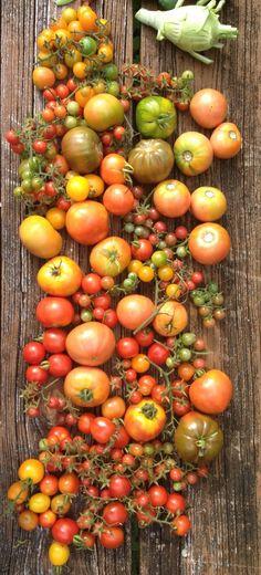 Ready To Grow Gardens | South Florida Organic Edible Gardens