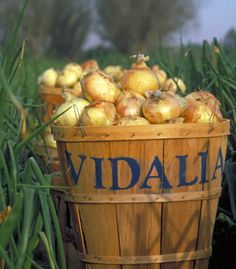Onions from Vidalia, GA ~ only the BEST in the world!