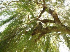 Tree Colony #1