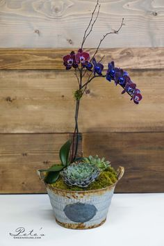 Orchids and succulents... bringing the best of both worlds into one rustic, yet elegant arrangement! | $109.97
