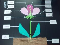 Science: Flower Anatomy 3D project School Lesson