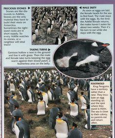 Penguin Facts | Penguin Place Penguin Facts, Female Head, Penguins, Places, Penguin, Lugares