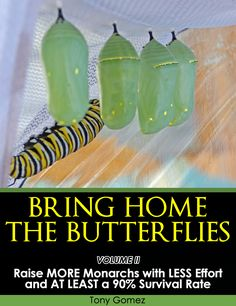 Have you ever had an unhappy ending raising monarch butterflies? Following a proven system can greatly improve your success rate the next time, so both you and your monarchs will live happily ever after....