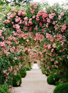 What a bloomingly beautiful aisle to walk down