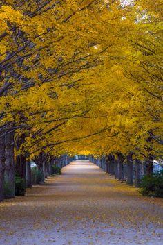 ShowaKinen Tokyo Japan  by Deseree Joy Villanueva on 500px