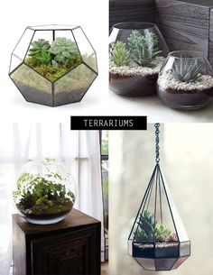 Indoor plant inspiration by Mintstudio Creations.com
