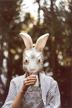 funny bunny drinks milk: not lactose intolerant. yay.
