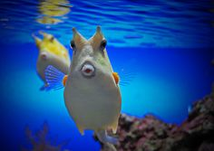 what a great shot :-)  #nature #ocean #fish #photography #underwater