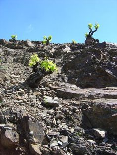 Vall Llach Vineyards in #Priorat. The vineyards are steep and rugged and the red wines are rich and intense.