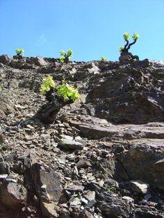 Vall Llach Vineyards in Priorat