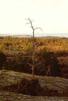 Soltuna in Geta, Northern Åland, Finland.  Photo Västgöten