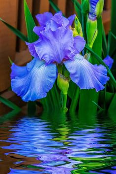Iris reflection |TZn