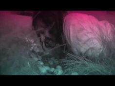 Music: Oneohtrix Point Never, Video footage: A Field In England (film)