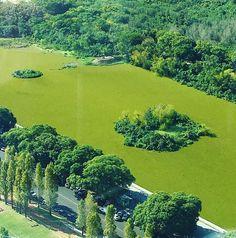 #reserva #ecologica #buenosaires #green #nature