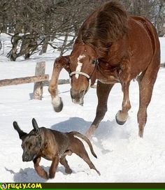 Horse looking to have a quiet word with dog.