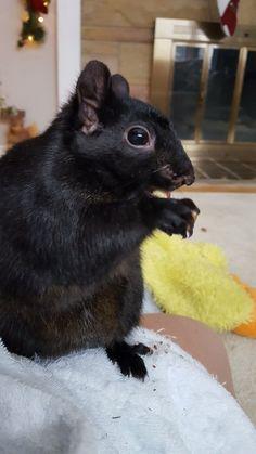 Honey, my black squirrel!  :)