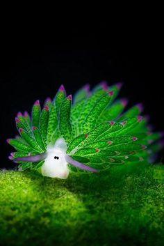 Ces limaces de mer colorées ressemblent à des moutons dun dessin animé (PHOTOS)                                                                                                                                                      Plus