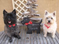 My Gorgeous Monty & Maggie making our announcement to friends & family