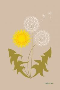 Mackenzie Griffin- There is emphasis on the yellow flower of the dandelion. Your eyes are drawn to the bright yellow rather than the two white flowers of the dandelion. Dandelion Clock, Dandelion Wish, Dandelion Flower, Illustration Photo, Illustrations, Deco Floral, Arte Floral, Taraxacum Officinale, Botanical Prints