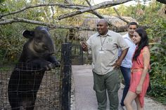 "Hats off to ""The Best Little Zoo in the World"", The Belize Zoo for these amazing Trip Advisor reviews! Read them here: http://belize-travel-blog.chaacreek.com/2015/09/the-belize-zoo-is-a-wonderland/"