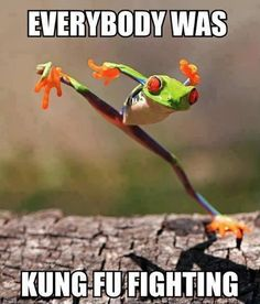 Little Frog #Everybody, #Fighting