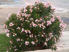 Kvitnúce dreviny | Kvety a Záhrada