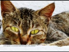 Spying Cat
