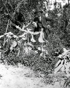 Jardin d'Os d'Agnès Jones (années 1910 - Floride - USA)