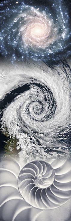 Galaxy, Hurricane, Nautilus Shell - Adam Apollo