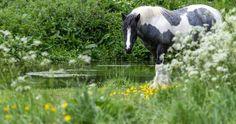 horse in grass wallpaper 4k ultra hd wallpaper