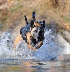 Cairo: Navy Seal War Dog