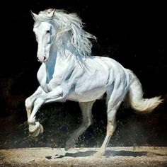 The Carthusian Horse Most Beautiful Horses, Pretty Horses, Horse Love, Animals Beautiful, Horse Photos, Horse Pictures, Horse Wallpaper, Horse Sketch, Horse Anatomy