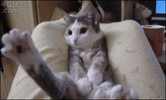 Cool Cat Gif's - http://www.catnipdaily.com/cool-cat-gifs-2/