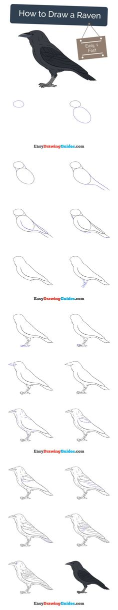 Learn How to Draw Raven: Easy Step-by-Step Drawing Tutorial for Kids and Beginners. #spiderman #drawing. See the full tutorial at https://easydrawingguides.com/how-to-draw-a-raven/