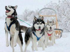 【画像】犬橇の風景を。