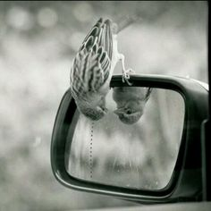 Image in Fotografia em preto e branco/Photography black and white collection by Valentina Venceslau Hello Beautiful, Beautiful Birds, Animals Beautiful, Beautiful Things, Animals And Pets, Funny Animals, Cute Animals, Animal Memes, Animal Funnies