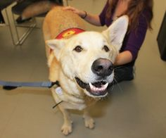 Morningside Campus welcome's Therapeutic Paws of Canada to the Campus Tuesday April 16 - Thursday April 18 Centennial College, Final Test, Applied Science, Feeling Stressed, Four Legged, Labrador Retriever, Corgi, Therapy, Student