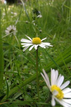 Trockenfilzen - eine Filzblume